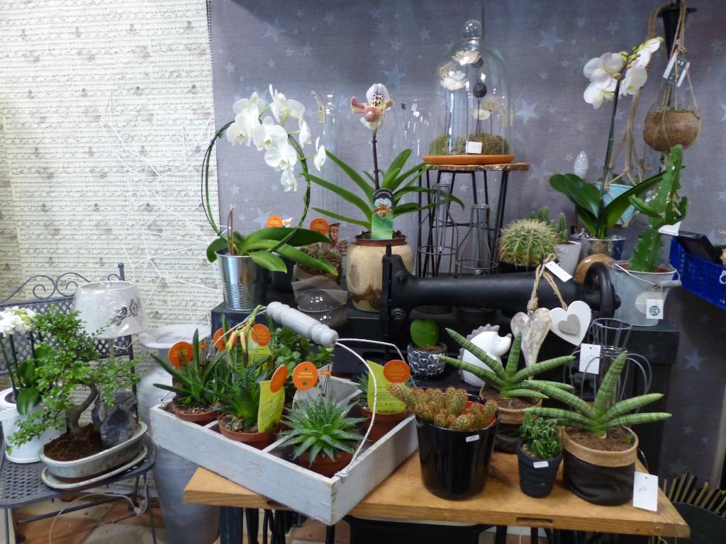 Fonds de commerce Fleuriste et murs, Finistère Sud